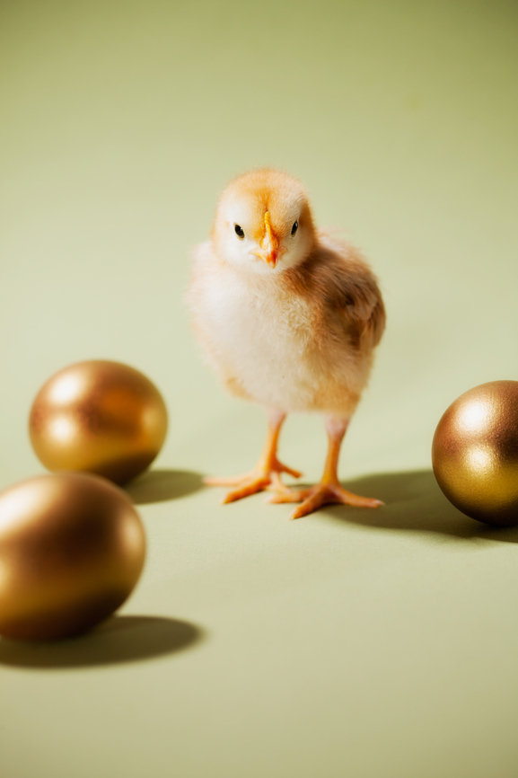 Chicks: Baby Chick Walks Among Golden Eggs